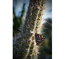 Butterfly on Cactus Photographic Print