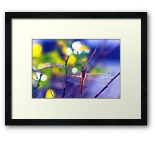 Sharing her gold with the world Framed Print