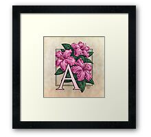 A is for Azalea - full image Framed Print