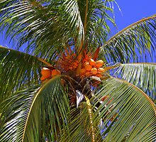 Coconuts by vette