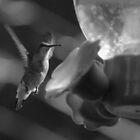 Hummingbird at Lunch by Joe Blount