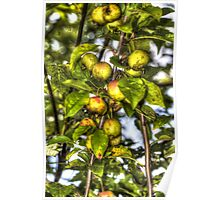 Apples For Wildlife Poster