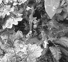Hide and Seek by Barbara Wyeth