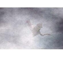 Blue Heron - West Chester Ohio Photographic Print