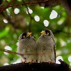 "Baby ""Birds"" by Toni McPherson"