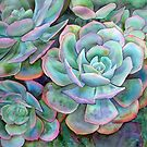 Succulents II by Karin Zeller