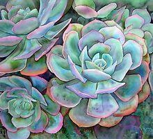 Succulents II by Karin Zeller