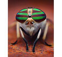 """Tabanus lineola"" Horse Fly Macro Photographic Print"