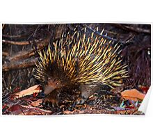 Mr Echidna - What Big Claws You Have Poster