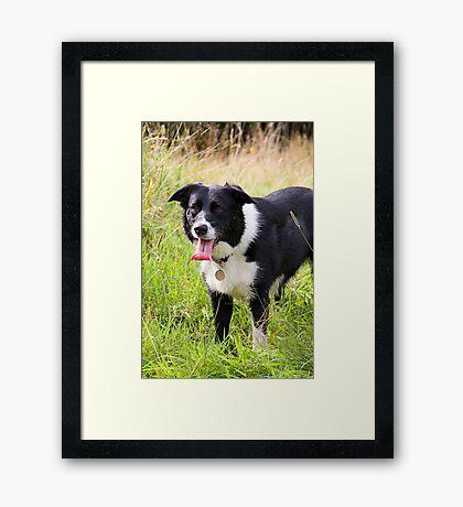 BORDER COLLIE Framed Print