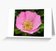 Raindrops on petals Greeting Card