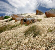 Grass tails among the granite by jwwallace