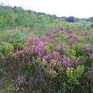 Ziepbeekvally,Nationaal Park Hoge Kempen, Limburg. by alaskaman53