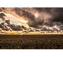 Sunset over the meadow Photographic Print