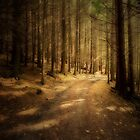 COME WALK WITH ME IN MY FOREST by leonie7