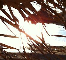 Sur la plage-Contre lumiere by takis52