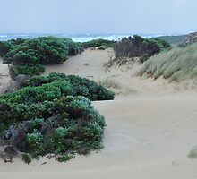 sheltered in the dunes by metriognome