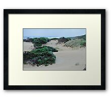 sheltered in the dunes Framed Print