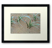 windswept dune grass Framed Print