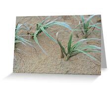 windswept dune grass Greeting Card