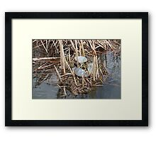 Three Painted Turtles in a Marsh Framed Print
