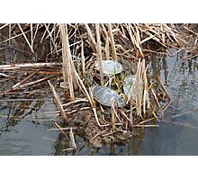 Three Painted Turtles in a Marsh Photographic Print