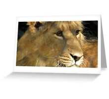Amber Eyes Greeting Card