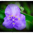 ONE BLUE FLOWER by Diane Peresie
