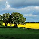 Jogging through spring fields by jchanders