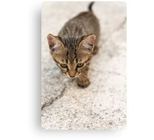 Cat puppy  Canvas Print