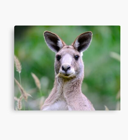 """ Portrait of a Kangaroo II "" Canvas Print"