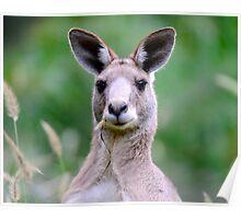 """"""" Portrait of a Kangaroo II """" Poster"""
