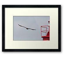 Osprey and Light Framed Print