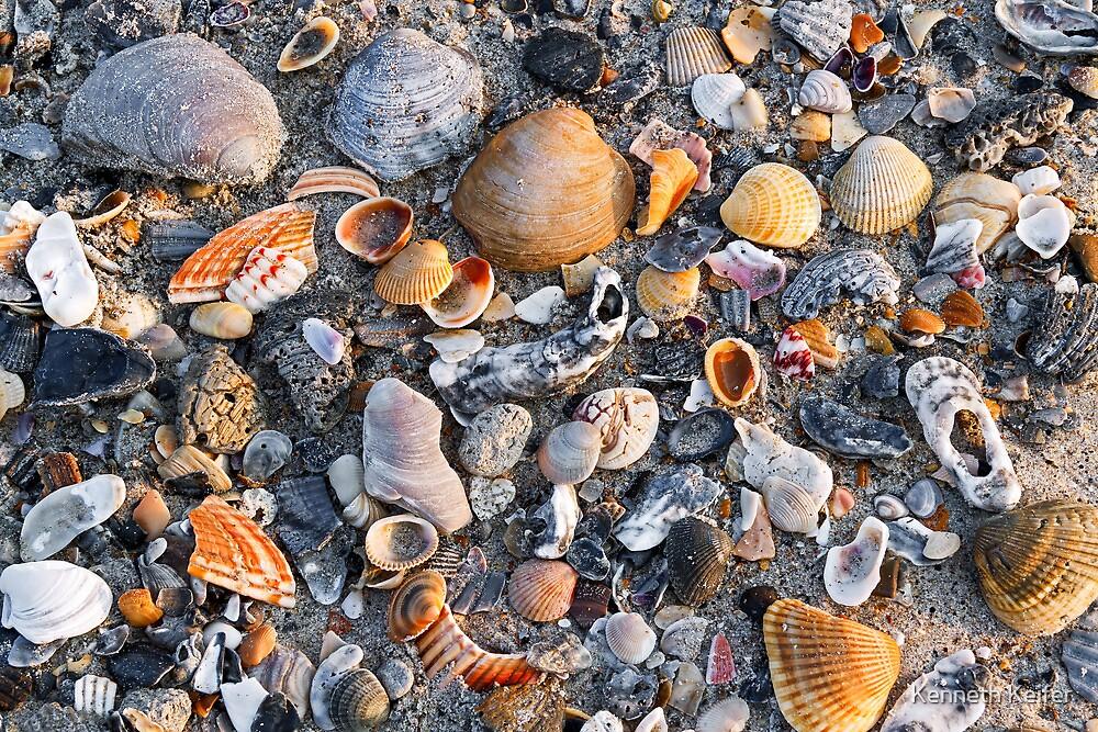 Seashells on Sandy Beach by Kenneth Keifer