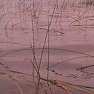 Lake Champlain - reeds - 8.31.2013 by Nadia Korths