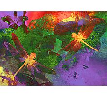 Painting Dragonflies & Flowers Photographic Print
