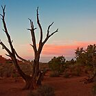 Desert Tree - Utah by Daniel Owens