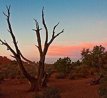 Desert Tree - Utah by Daniel Owens