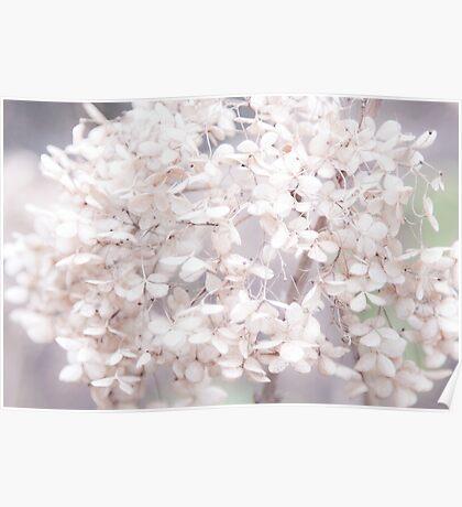 White Flower III Poster