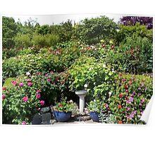 Butchart Gardens Rose Garden Poster