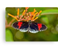 Common Longwing Butterfly Canvas Print