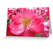 NY June Flower Close-Up, Liberty Community Garden, Lower Manhattan, New York City Greeting Card