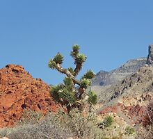 Joshua Tree by Vickie Emms