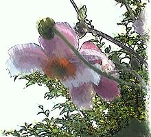 Anemone ...  by OlaG