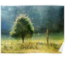 Cedar In Morning Light Poster