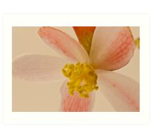 Rex Begonia Blossom Macro Art Print
