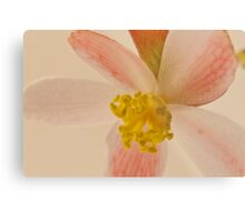 Rex Begonia Blossom Macro Metal Print