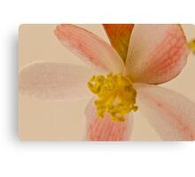 Rex Begonia Blossom Macro Canvas Print