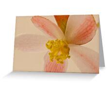 Rex Begonia Blossom Macro Greeting Card