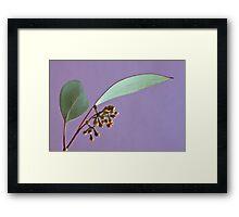 Eucalyptus Leaves And Buds - Macro  Framed Print
